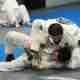 Adult Jiu-Jitsu – Fundamentals